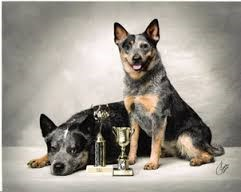 two dogs with conformation trophies